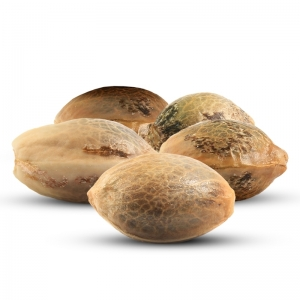 5 volných konopných semen