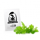 Chervil Royal Guardians