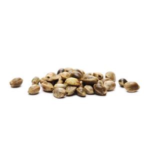8 Konopných Semínek Zdarma