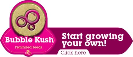 Buy Bubble bubba kush cannabis seeds
