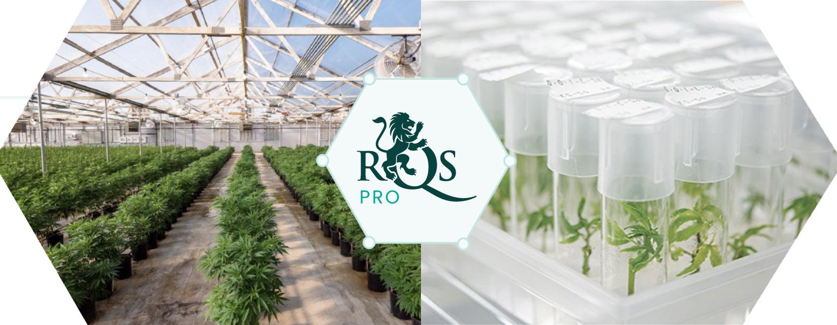 RQS Pro: Inovace a Vývoj v Oblasti Konopí