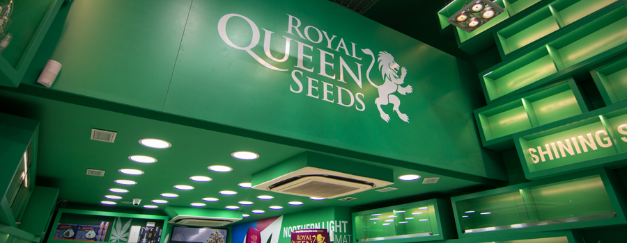 Royal Queen Seeds shop Barcelona Pelai