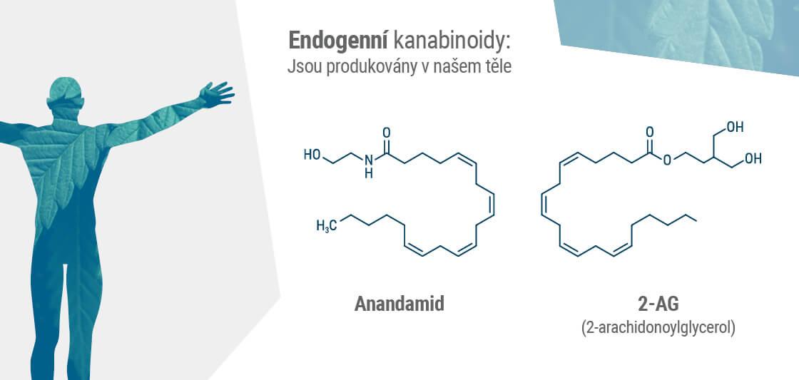 Dva hlavní endokanabinoidy v našem těle jsou anandamid a 2-AG.