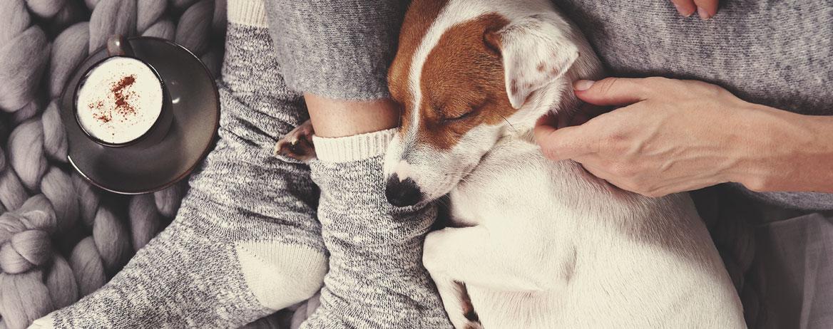 Co dělat, když váš pes zkonzumoval konopí?