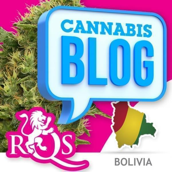 Cannabis in Bolivia