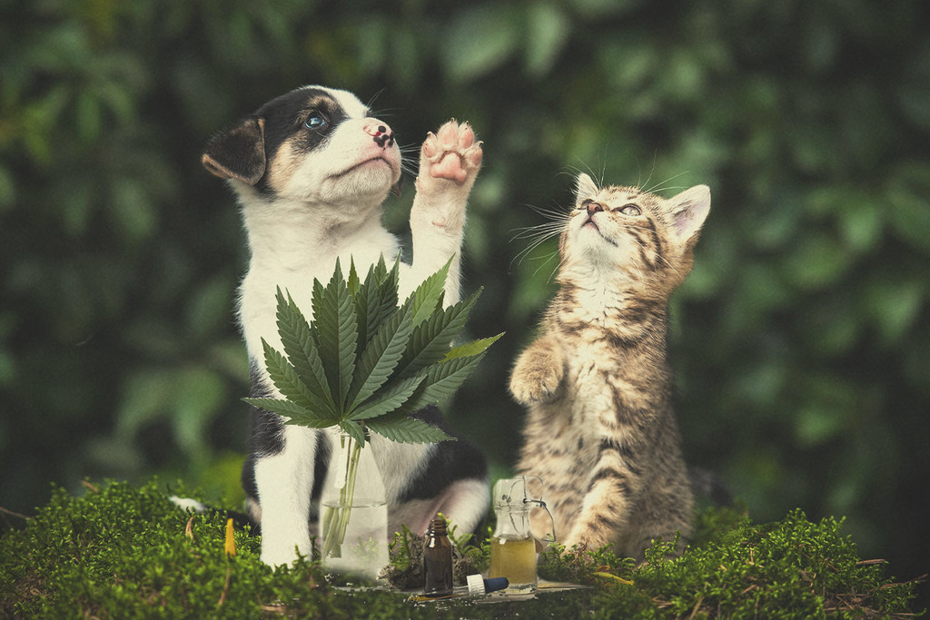 Medical Marijuana and pets