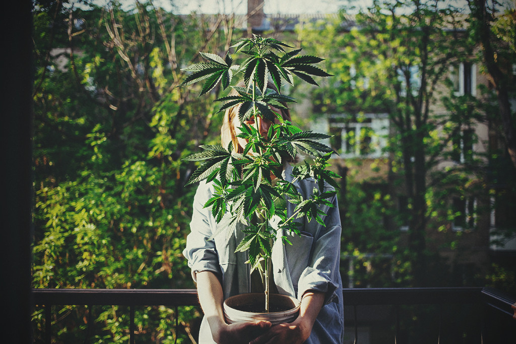 The Cannabis Strains Best Liked by Women