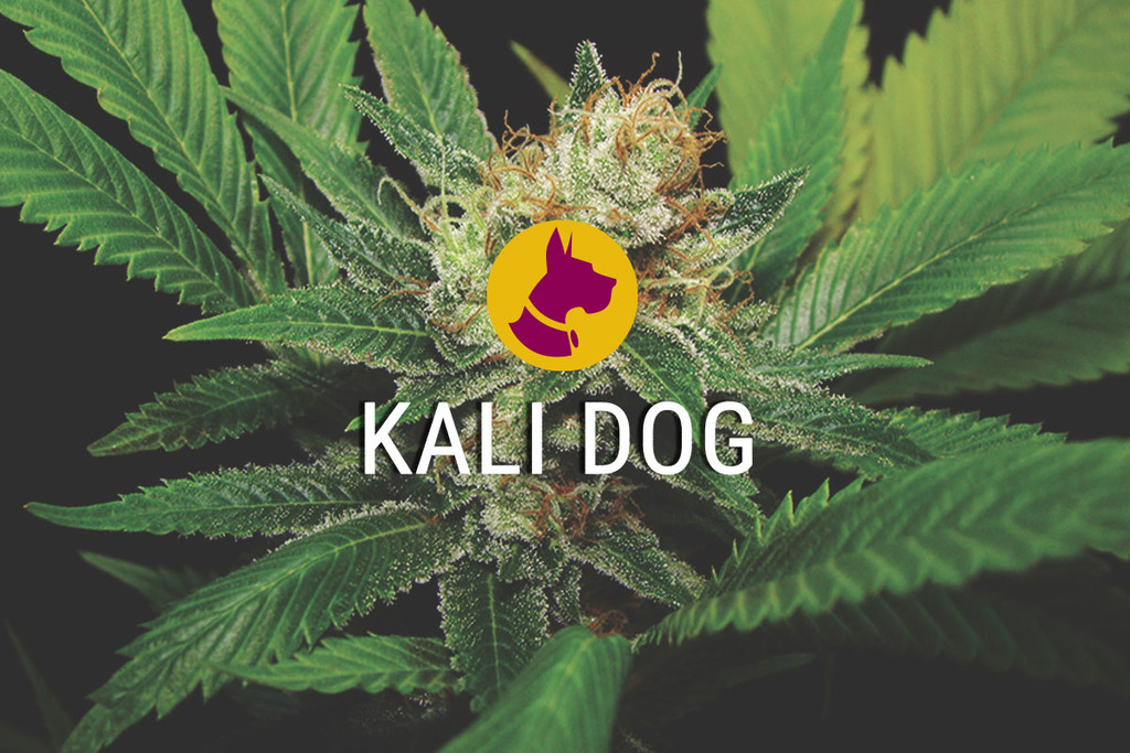 Kali Dog a Royal Chemdawg