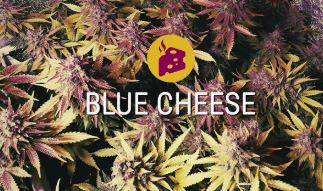 Blue Cheese Info